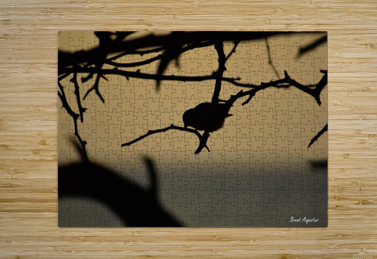 Branch  HD Metal print with Floating Frame on Back