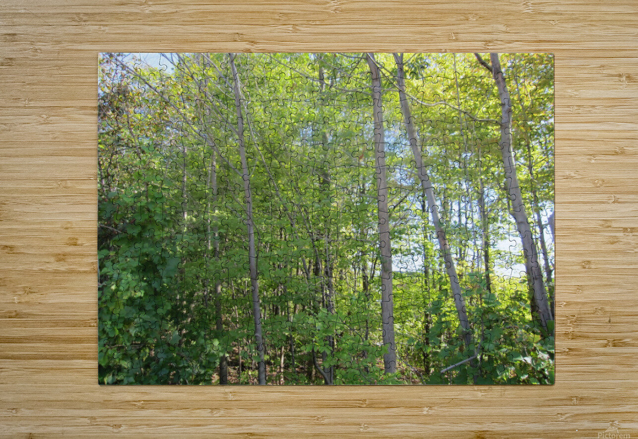 Landscape (288)  HD Metal print with Floating Frame on Back