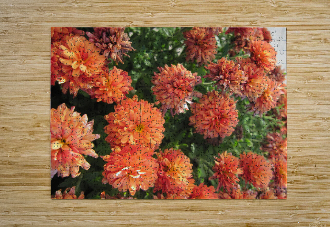 Flowers (53)  HD Metal print with Floating Frame on Back