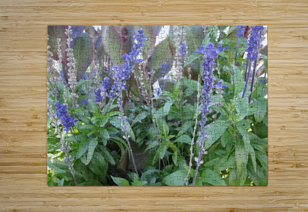 Flowers (49)  HD Metal print with Floating Frame on Back