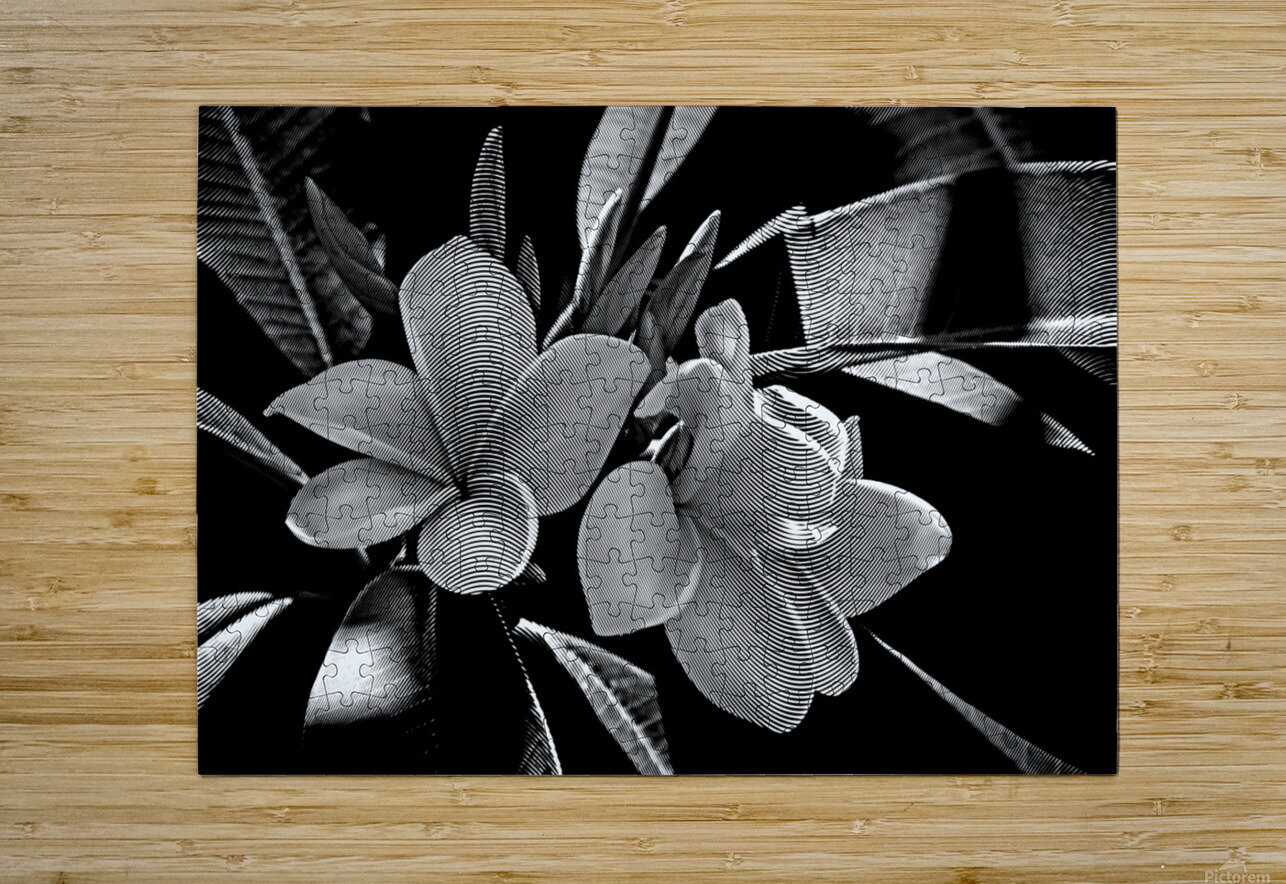Plumeria In Black And White  HD Metal print with Floating Frame on Back