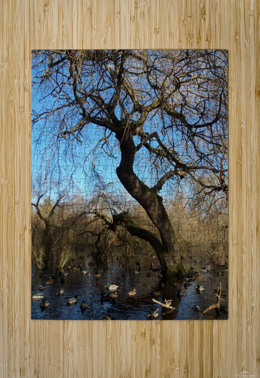 Bow Park duck pond  HD Metal print with Floating Frame on Back