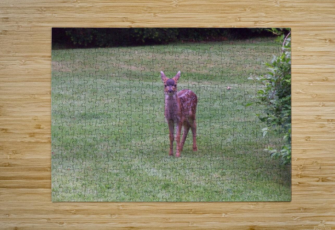 Deer  HD Metal print with Floating Frame on Back