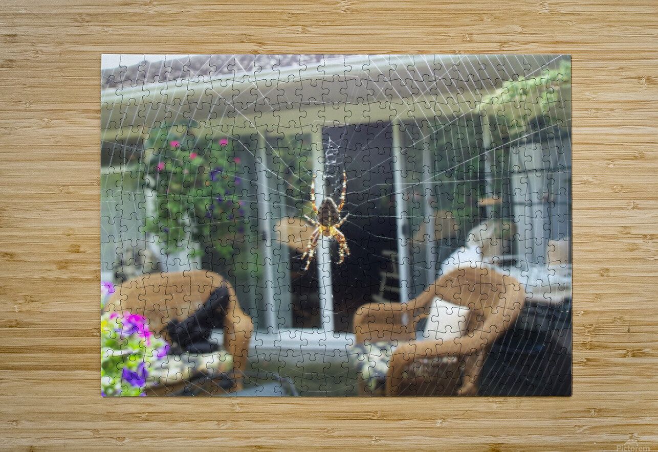 Spider  HD Metal print with Floating Frame on Back
