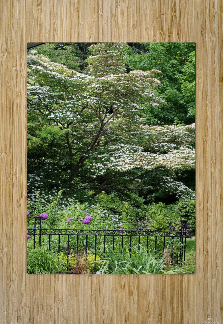 Garden with Dogwood 2018  HD Metal print with Floating Frame on Back
