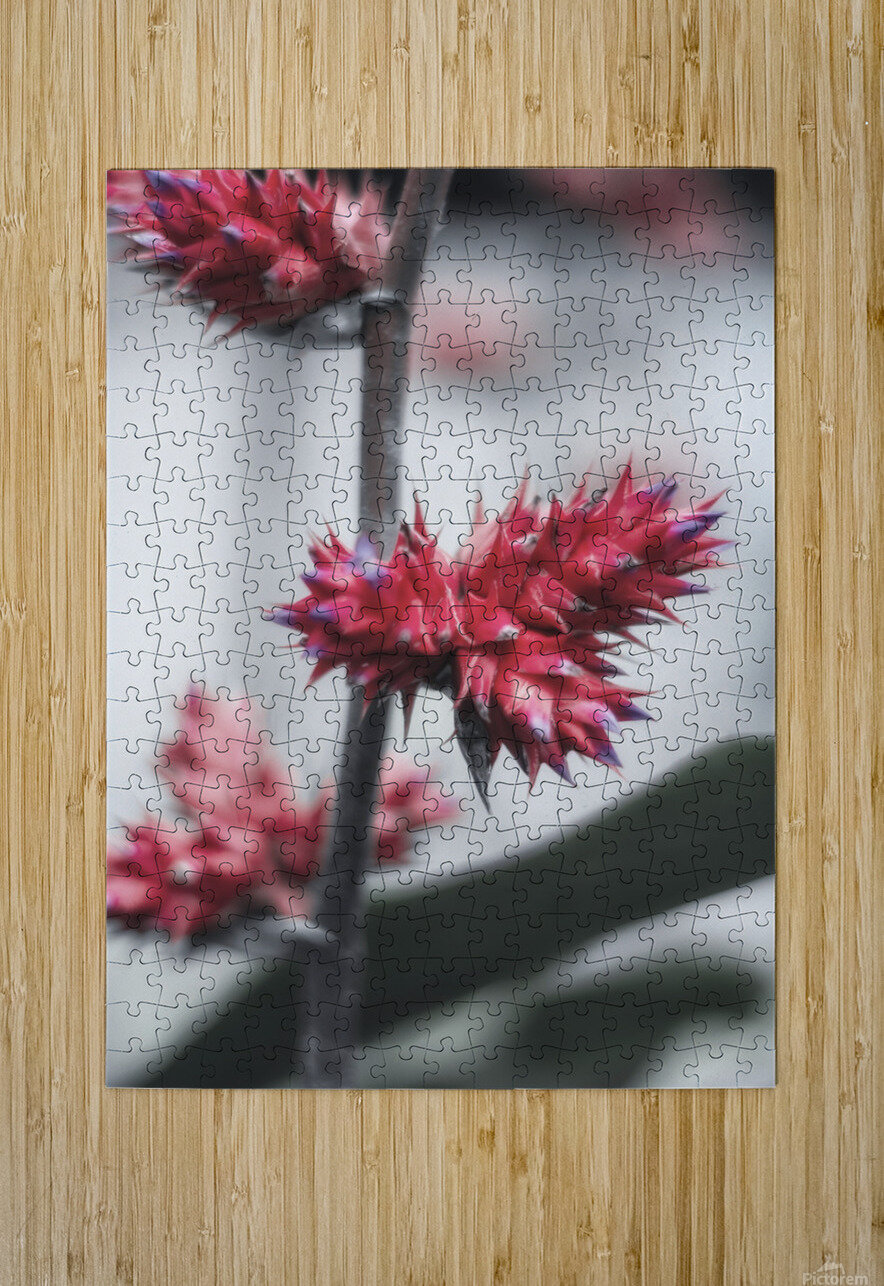 spiked flower  HD Metal print with Floating Frame on Back