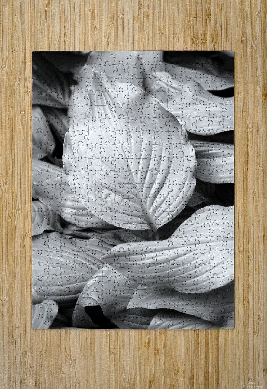 Softly Curving Foliage BW 062618  HD Metal print with Floating Frame on Back