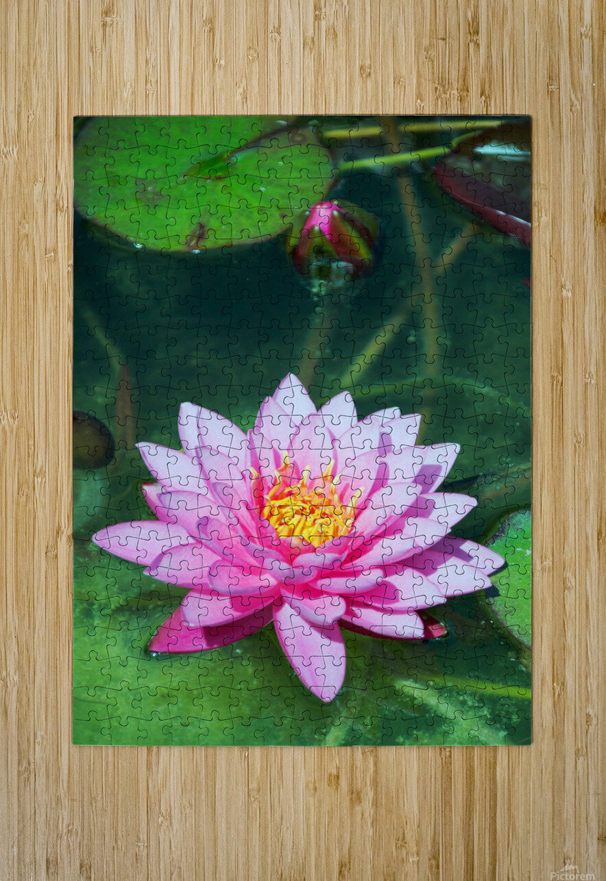 In the pond  HD Metal print with Floating Frame on Back