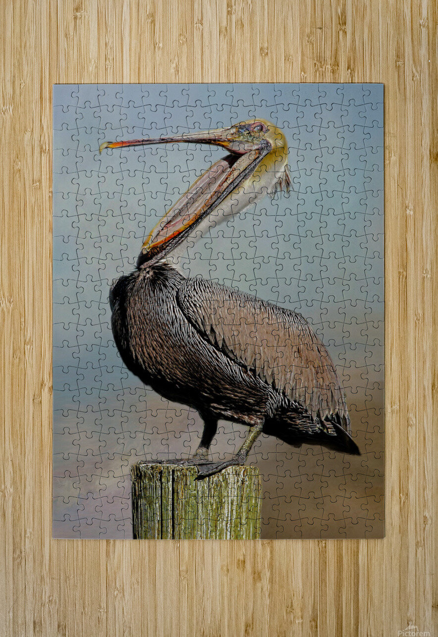 Belly Laugh-Brown Pelican   HD Metal print with Floating Frame on Back