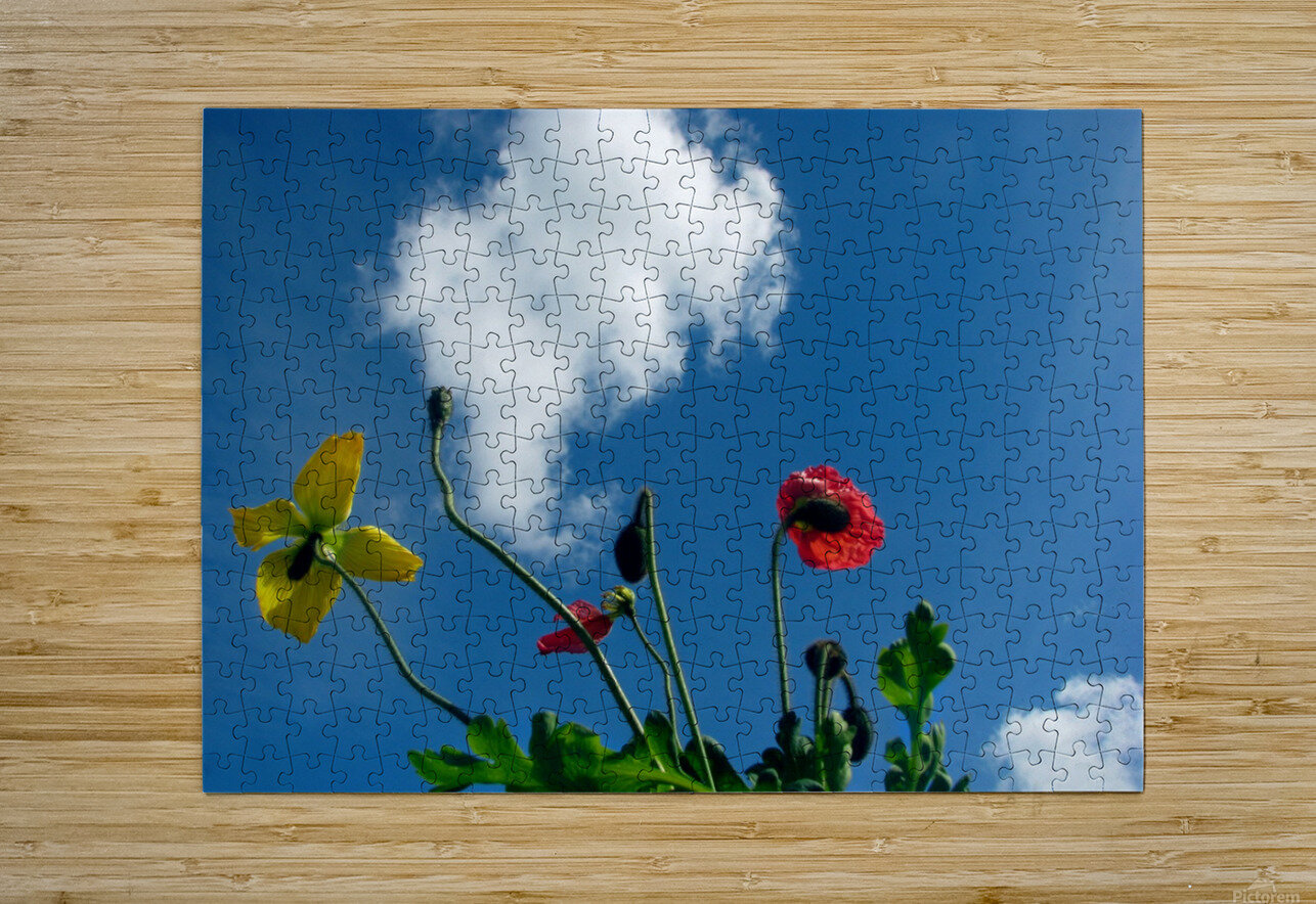 Happy Spring Flowers  HD Metal print with Floating Frame on Back