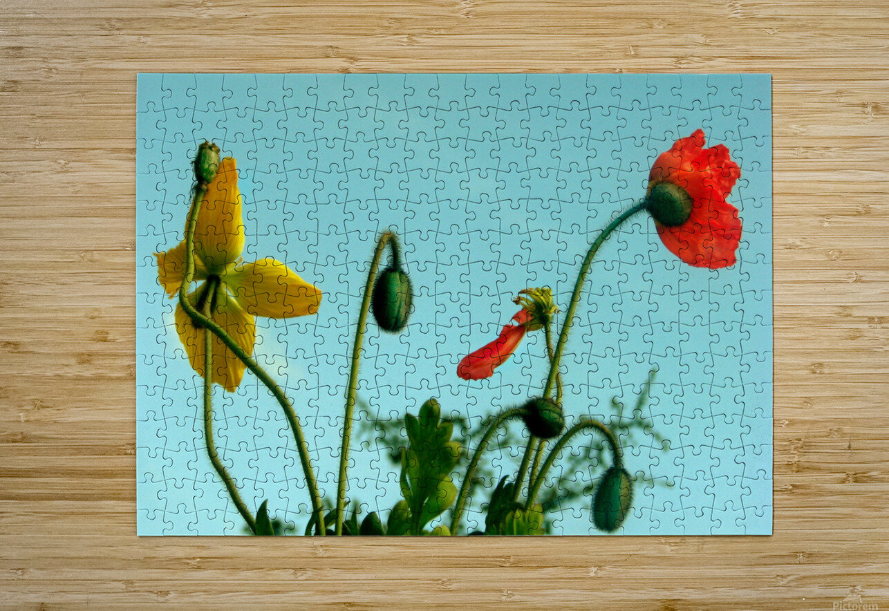 Spring Sky Flowers  HD Metal print with Floating Frame on Back