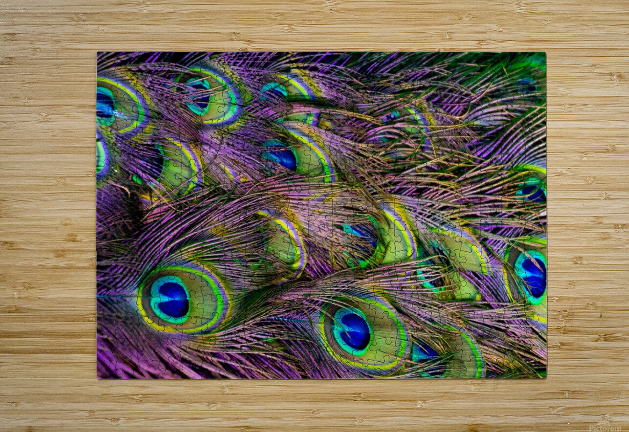 green purple and blue peacock feather digital wallpaper  HD Metal print with Floating Frame on Back