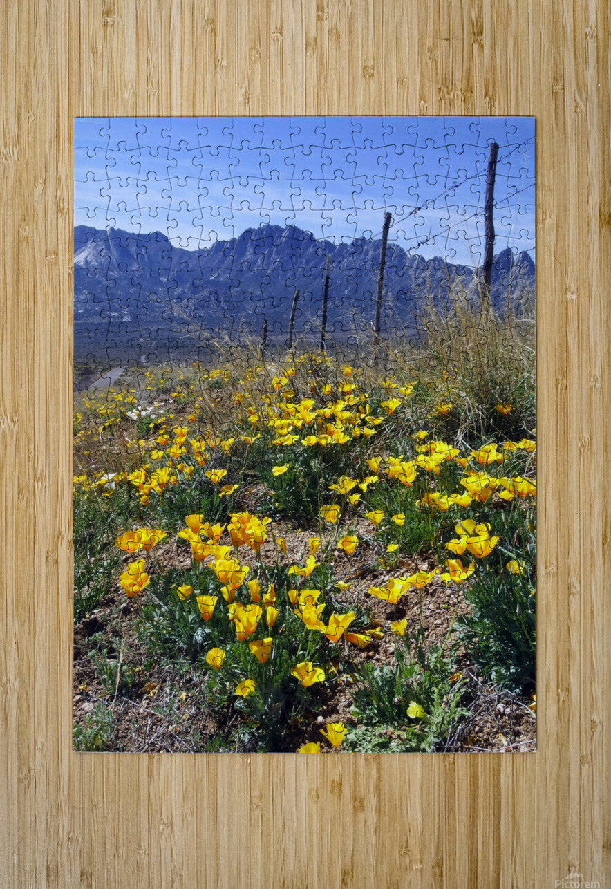 April at Aquirre Springs  HD Metal print with Floating Frame on Back