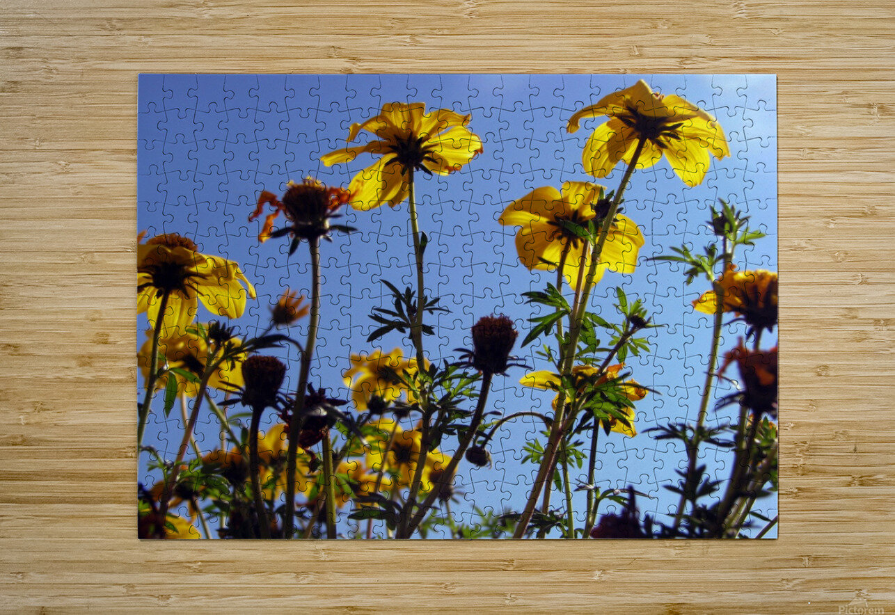 Summer Sky Flowers 1  HD Metal print with Floating Frame on Back