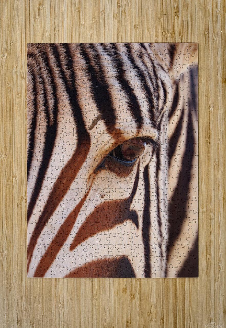 Zebra Eye 1873  HD Metal print with Floating Frame on Back