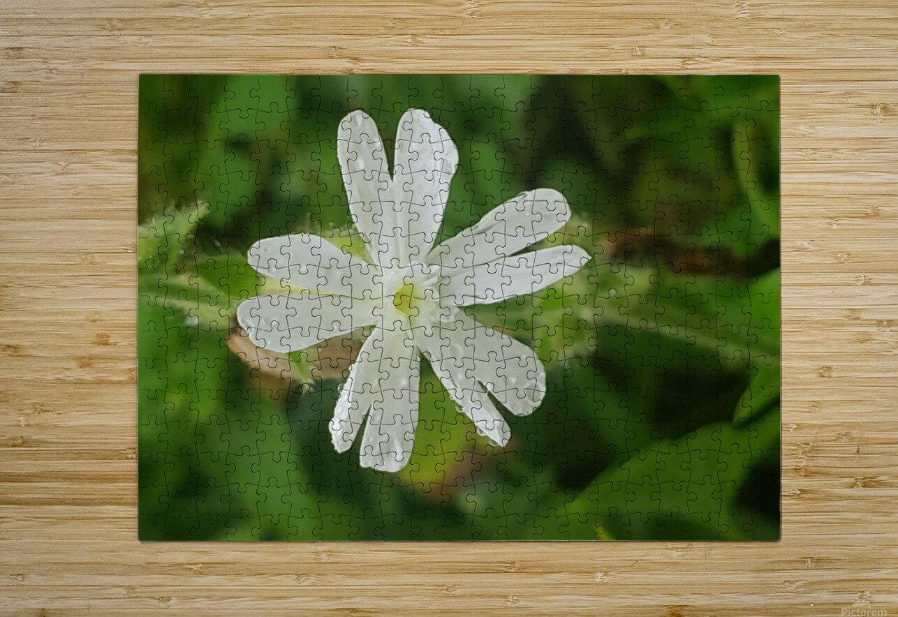 Flower shower  HD Metal print with Floating Frame on Back