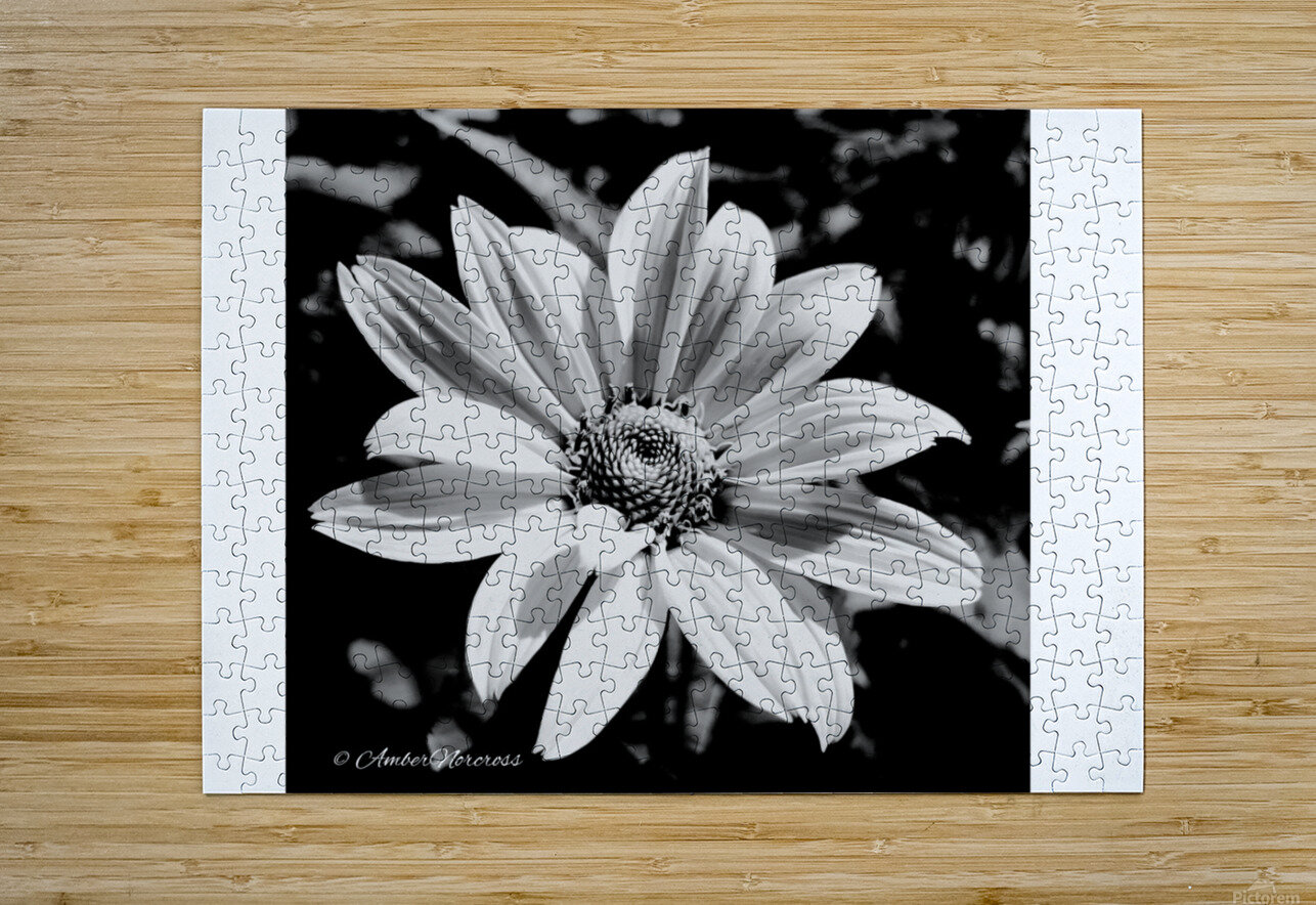 Daisy in bw  HD Metal print with Floating Frame on Back