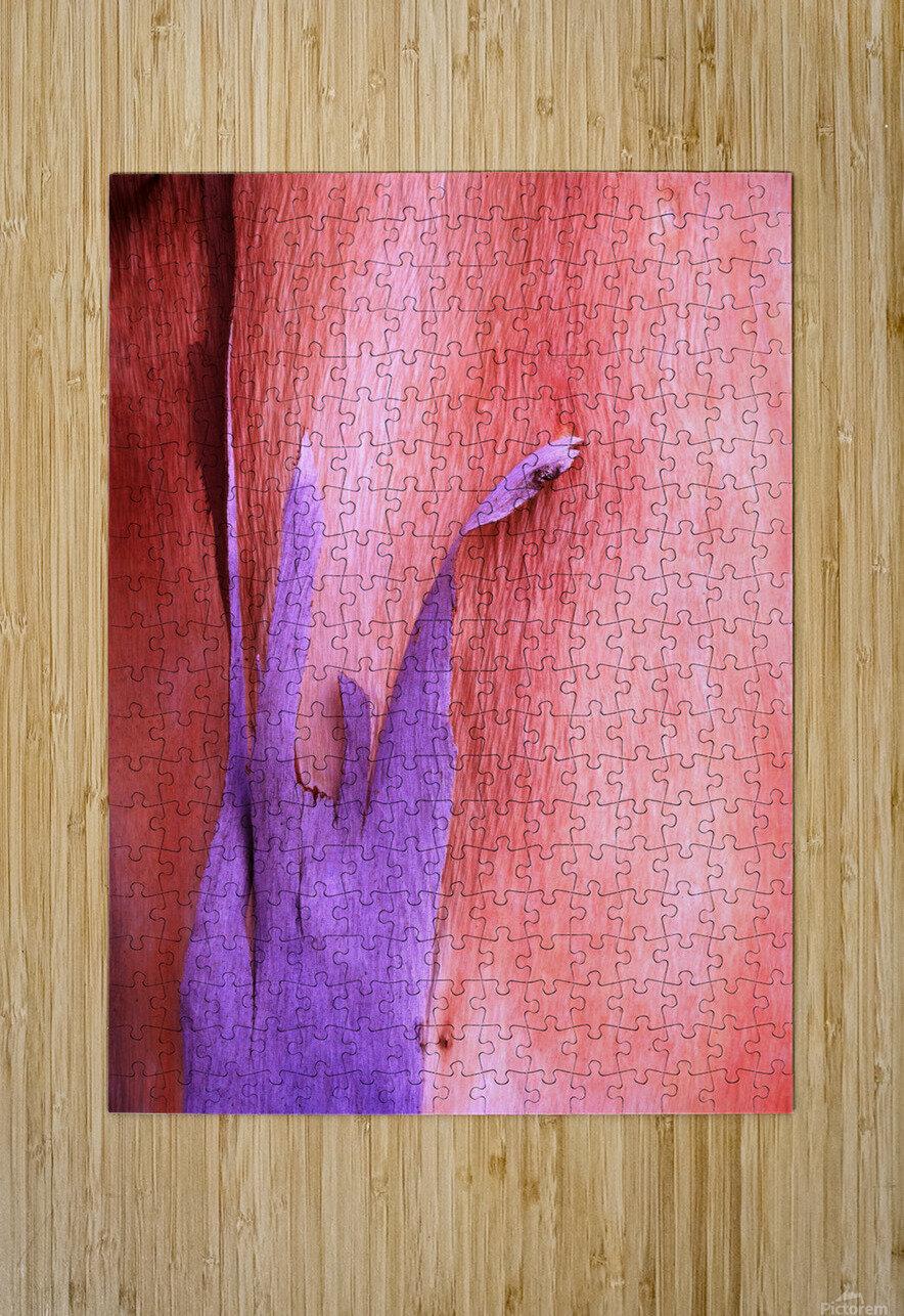 Salmon Gum Tree Bark 8  HD Metal print with Floating Frame on Back