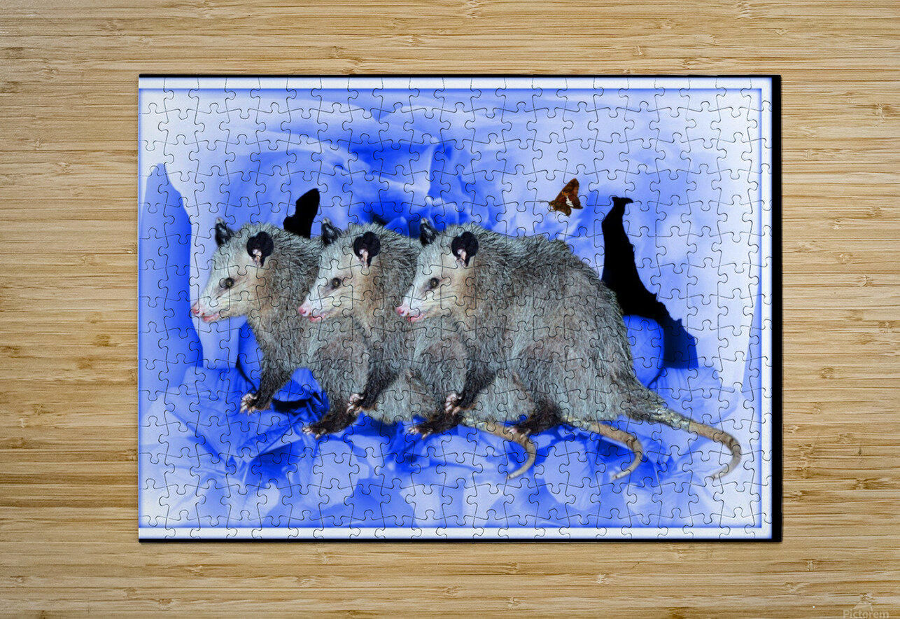 Party Of Possums  HD Metal print with Floating Frame on Back