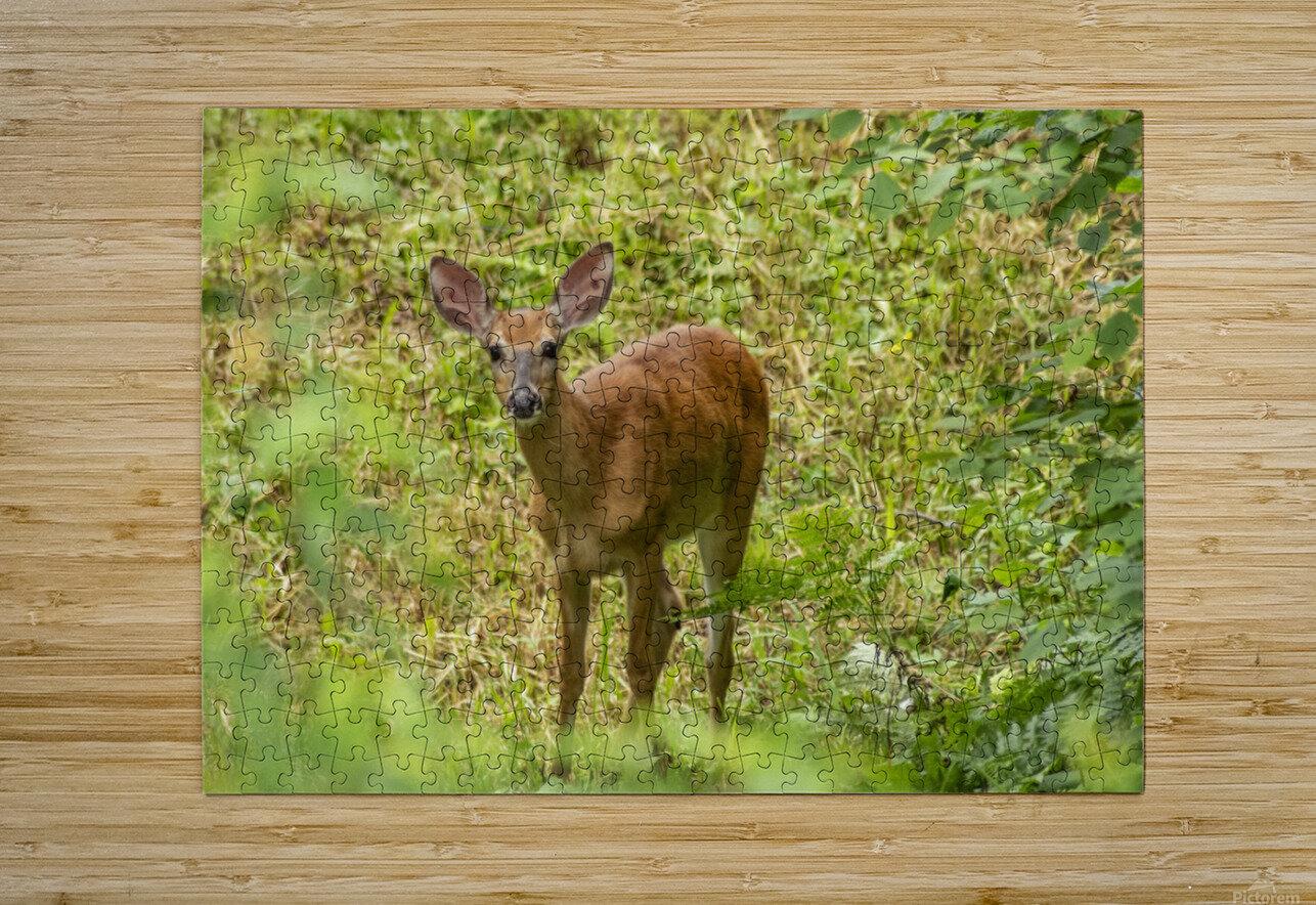 Oh Deer  HD Metal print with Floating Frame on Back