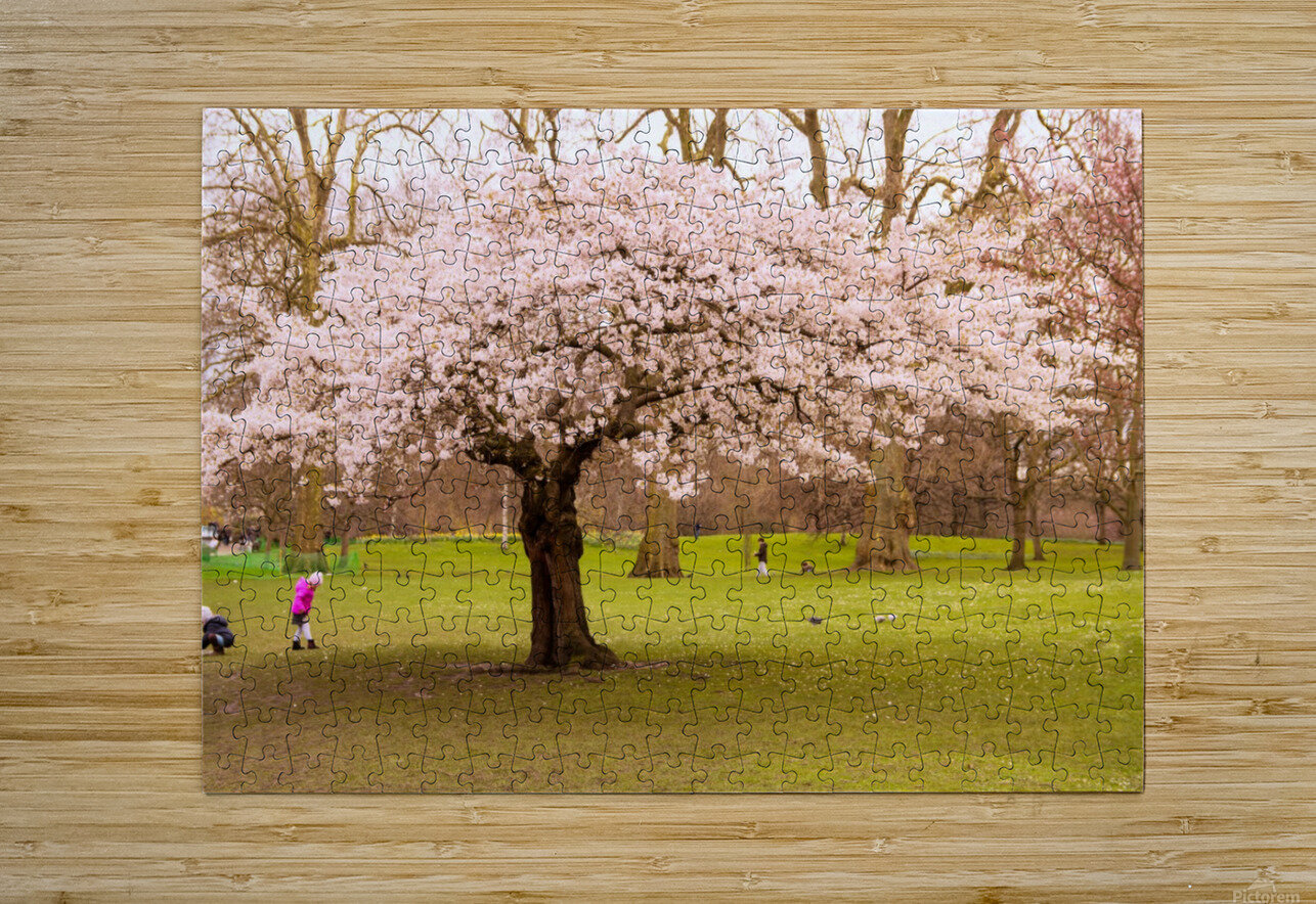 Blossom Tree  HD Metal print with Floating Frame on Back