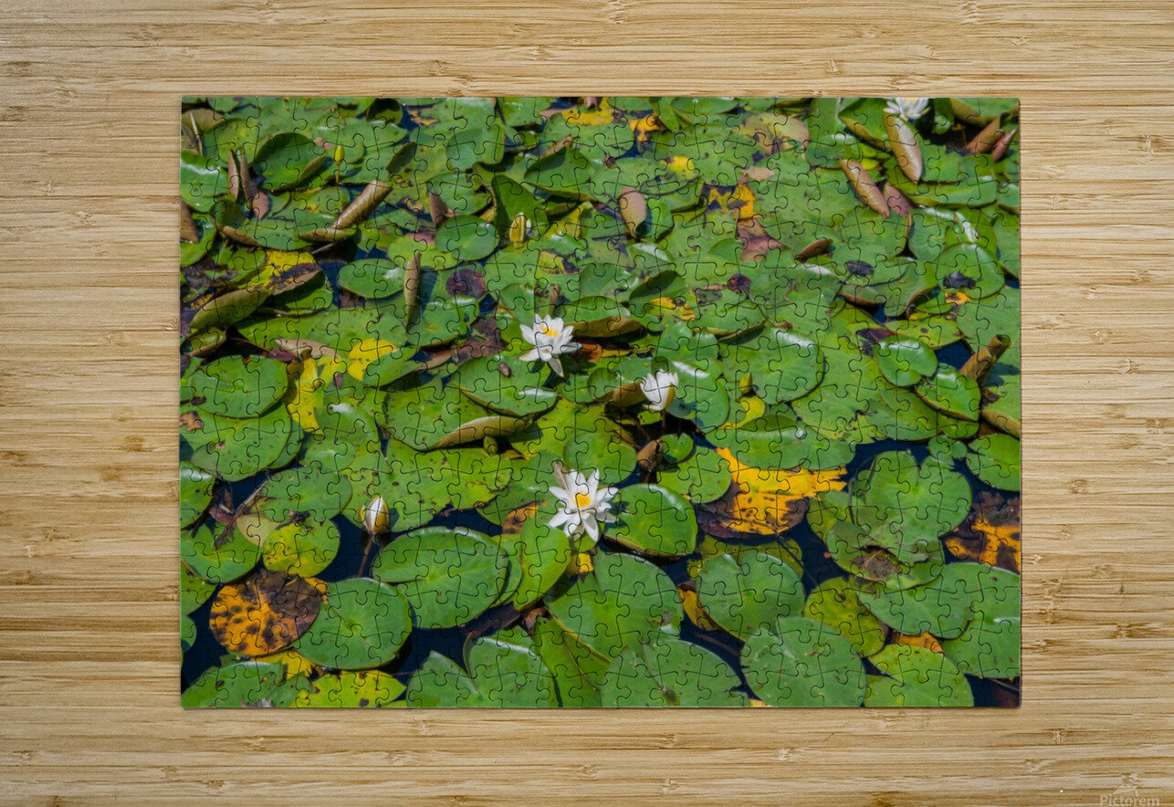 lily pads   HD Metal print with Floating Frame on Back