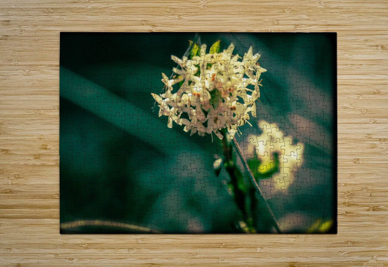 Rice Flower  HD Metal print with Floating Frame on Back
