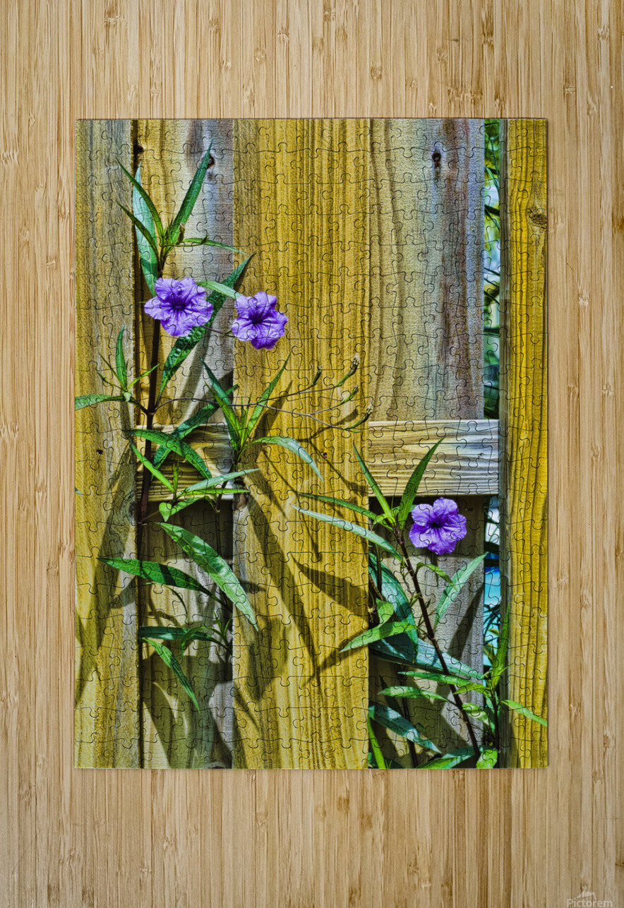 Fence Flowers 1  HD Metal print with Floating Frame on Back