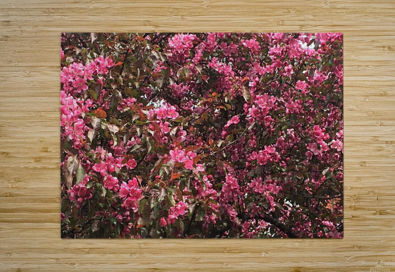 Flowering Tree  HD Metal print with Floating Frame on Back