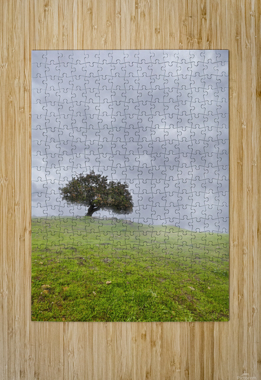 Enmeshed  HD Metal print with Floating Frame on Back
