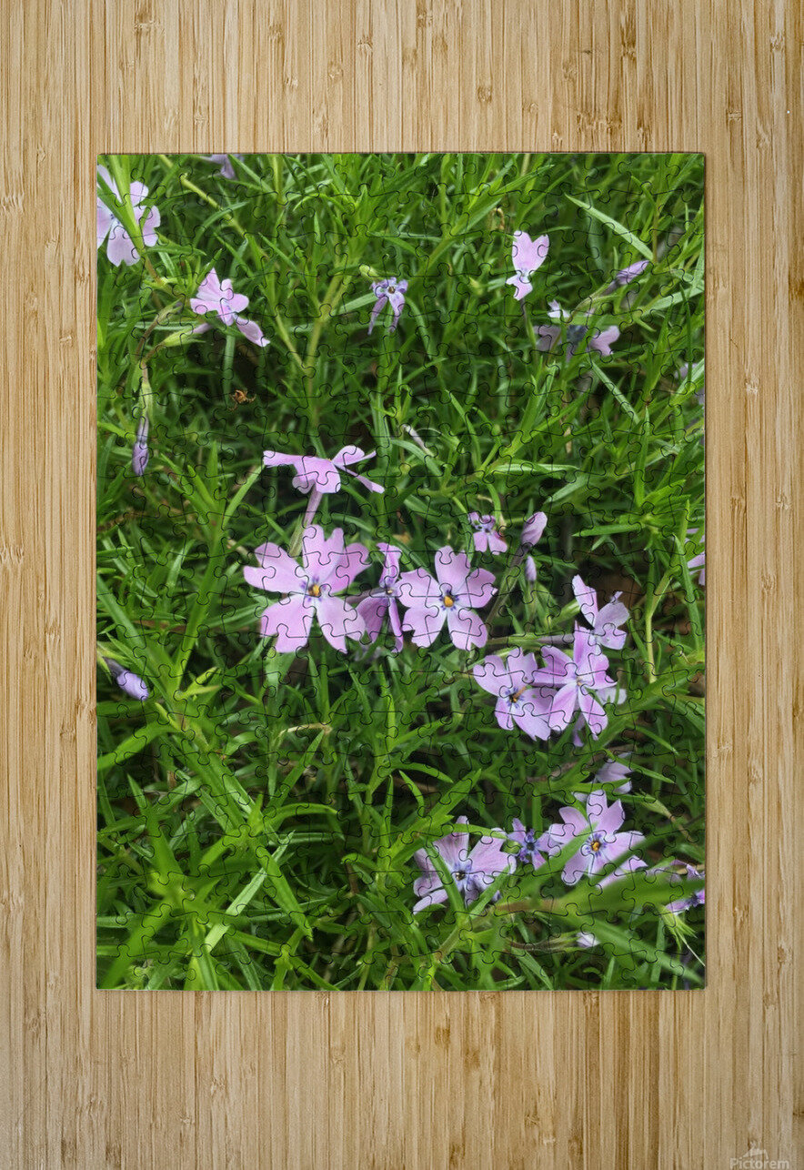 Purple Wild flowers  HD Metal print with Floating Frame on Back