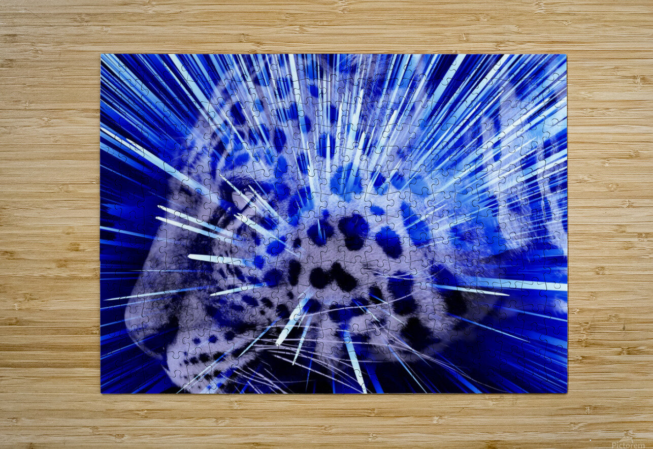 Leopard pop 4   HD Metal print with Floating Frame on Back
