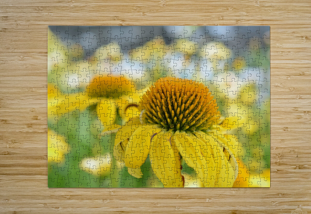 Yellow Flowers Photography  HD Metal print with Floating Frame on Back