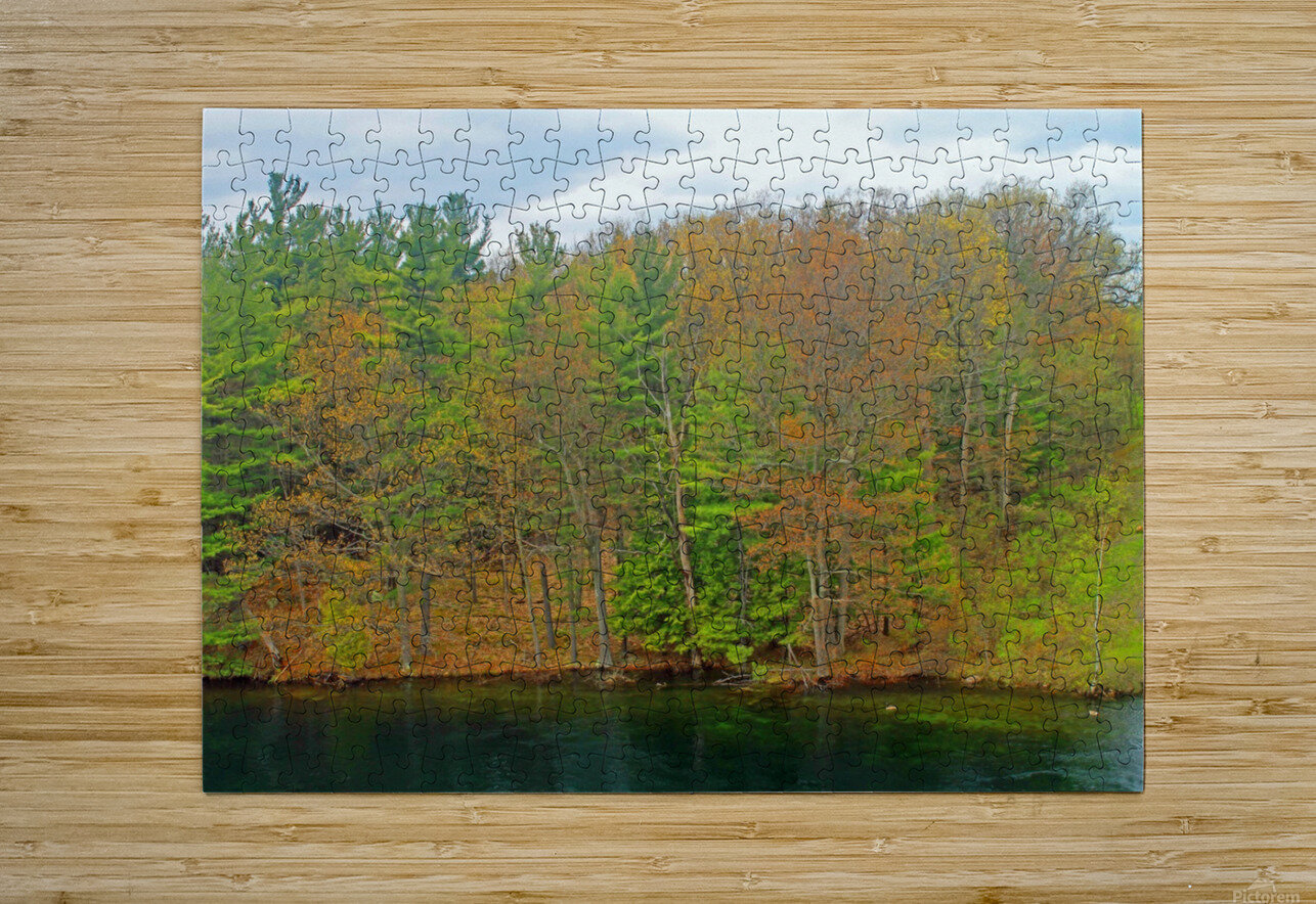 Lively Trees  HD Metal print with Floating Frame on Back