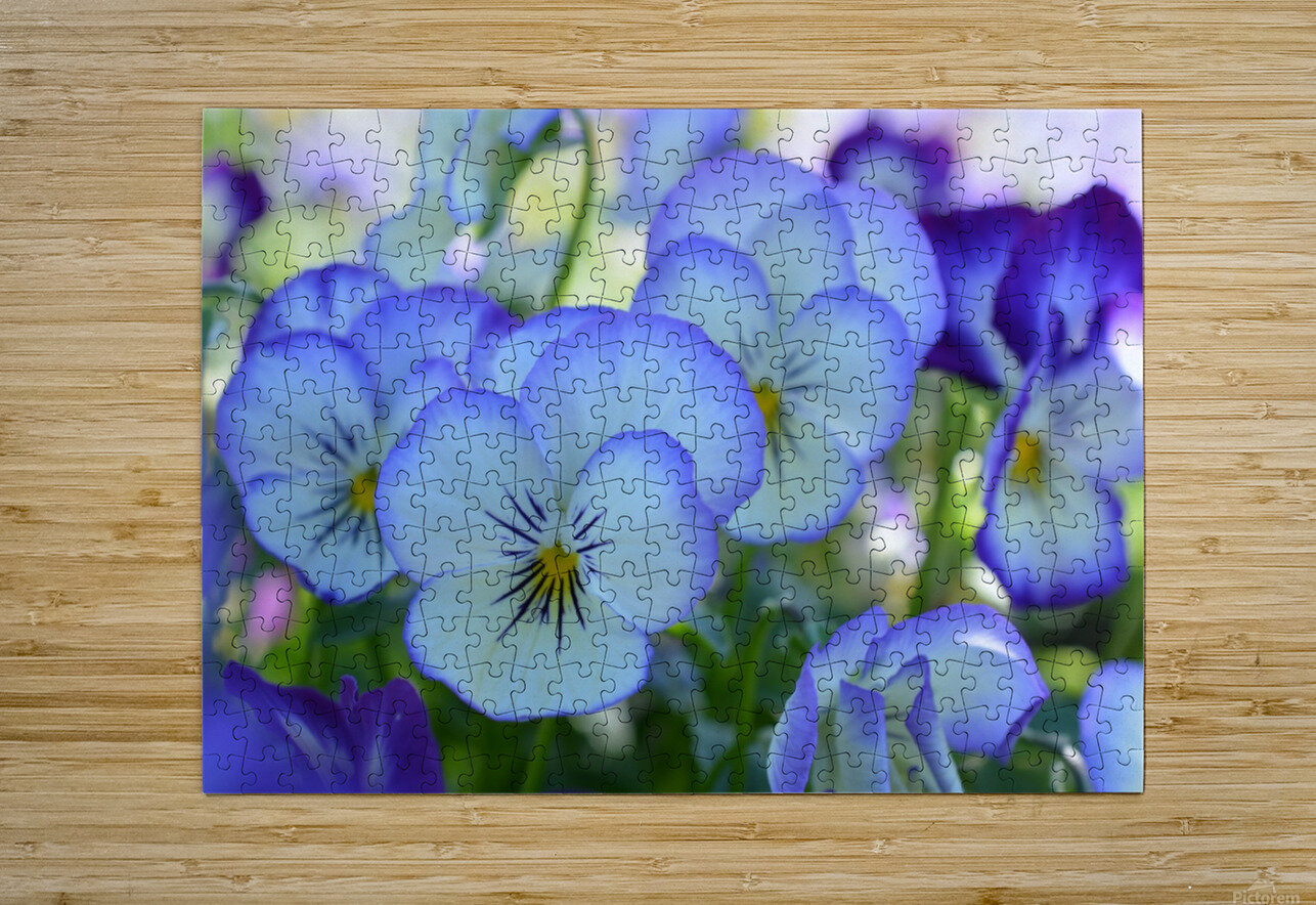 Blue Flower Garden Photograph  HD Metal print with Floating Frame on Back