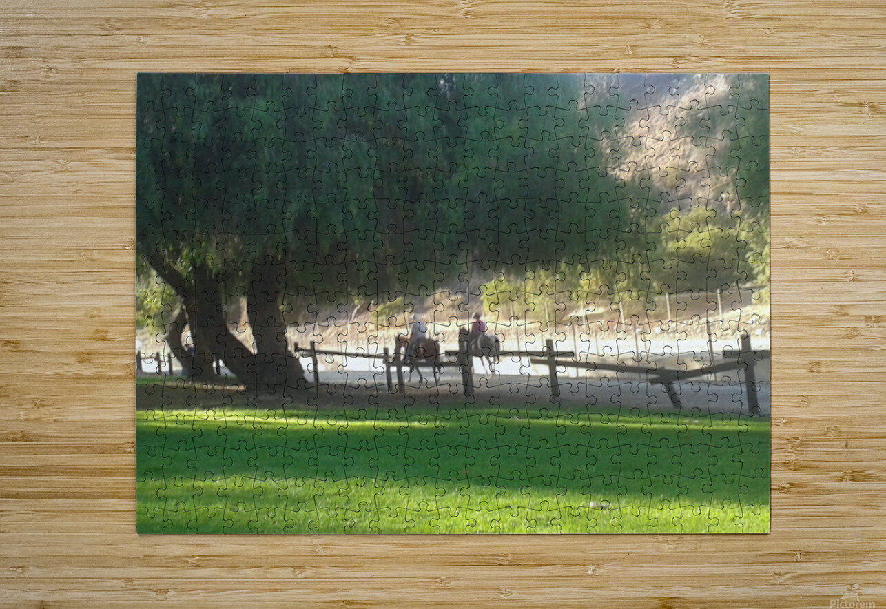 Horses at the park summertime   HD Metal print with Floating Frame on Back