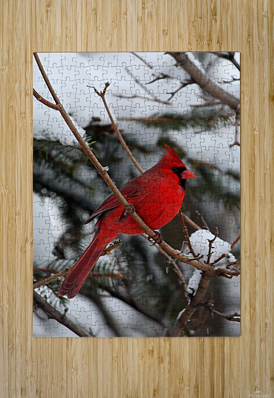 Vertical Cardinal  HD Metal print with Floating Frame on Back