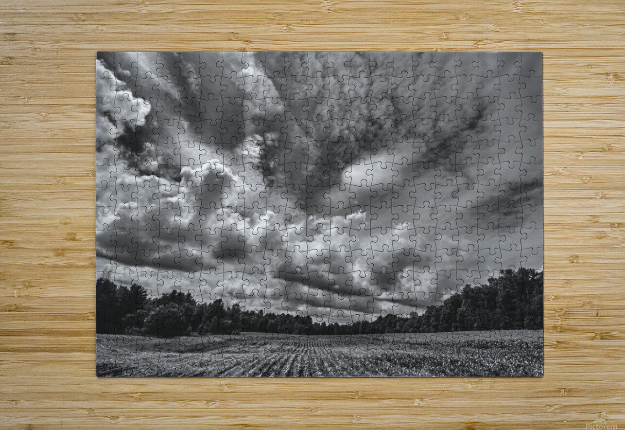 Corn Field  HD Metal print with Floating Frame on Back