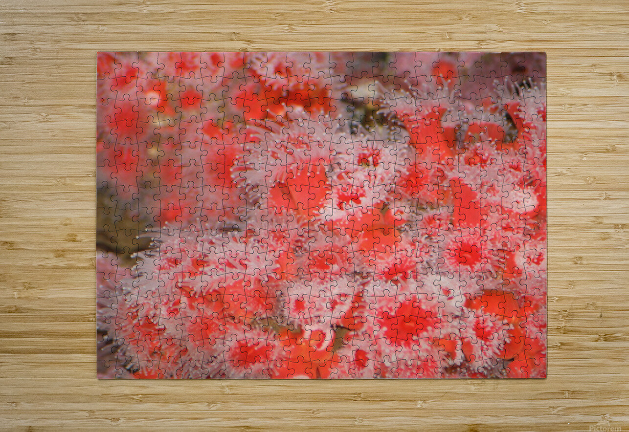 IMG_0613_1  HD Metal print with Floating Frame on Back
