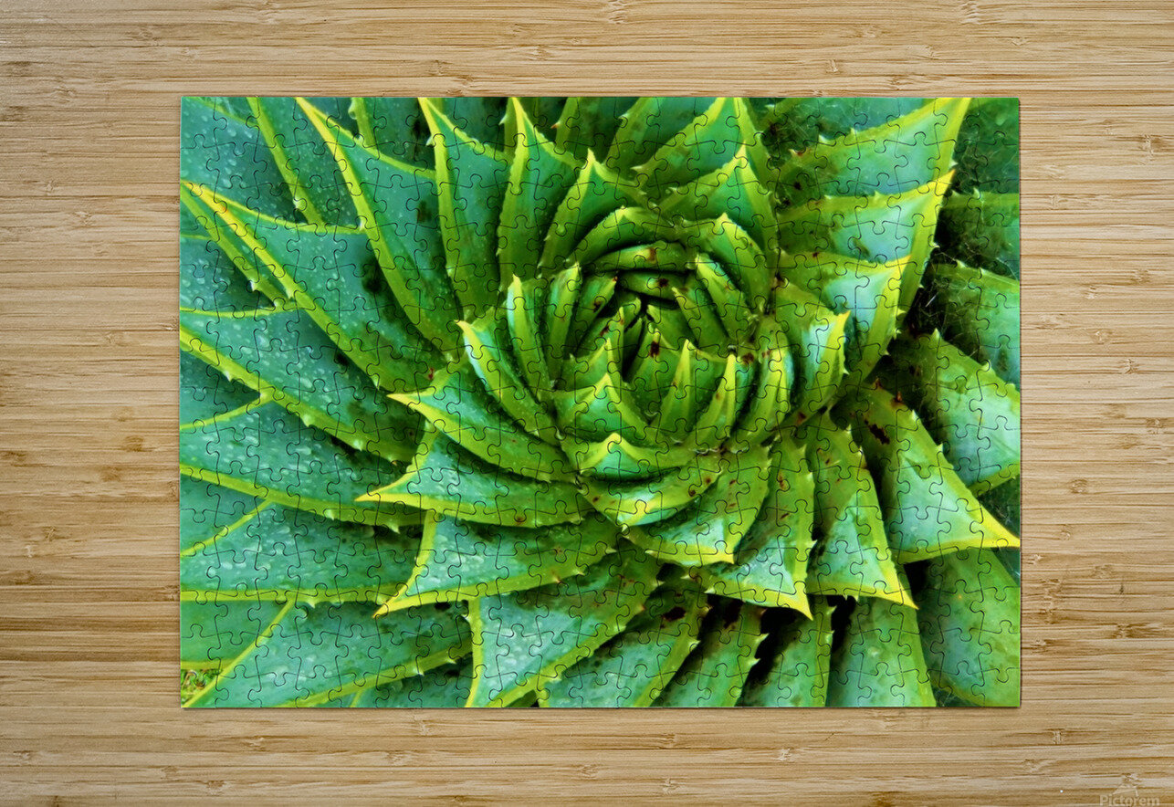 Cactus Spiral  HD Metal print with Floating Frame on Back