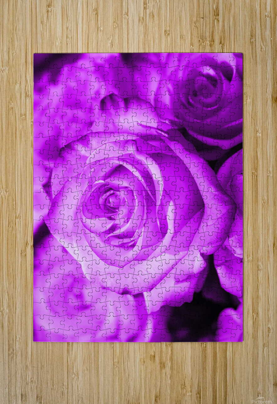Rose purple   HD Metal print with Floating Frame on Back