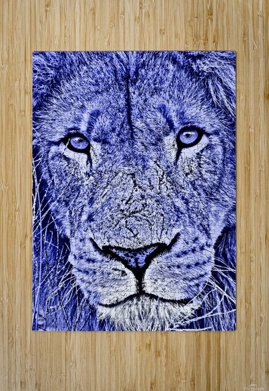 Male Lion Face thula art 5  HD Metal print with Floating Frame on Back