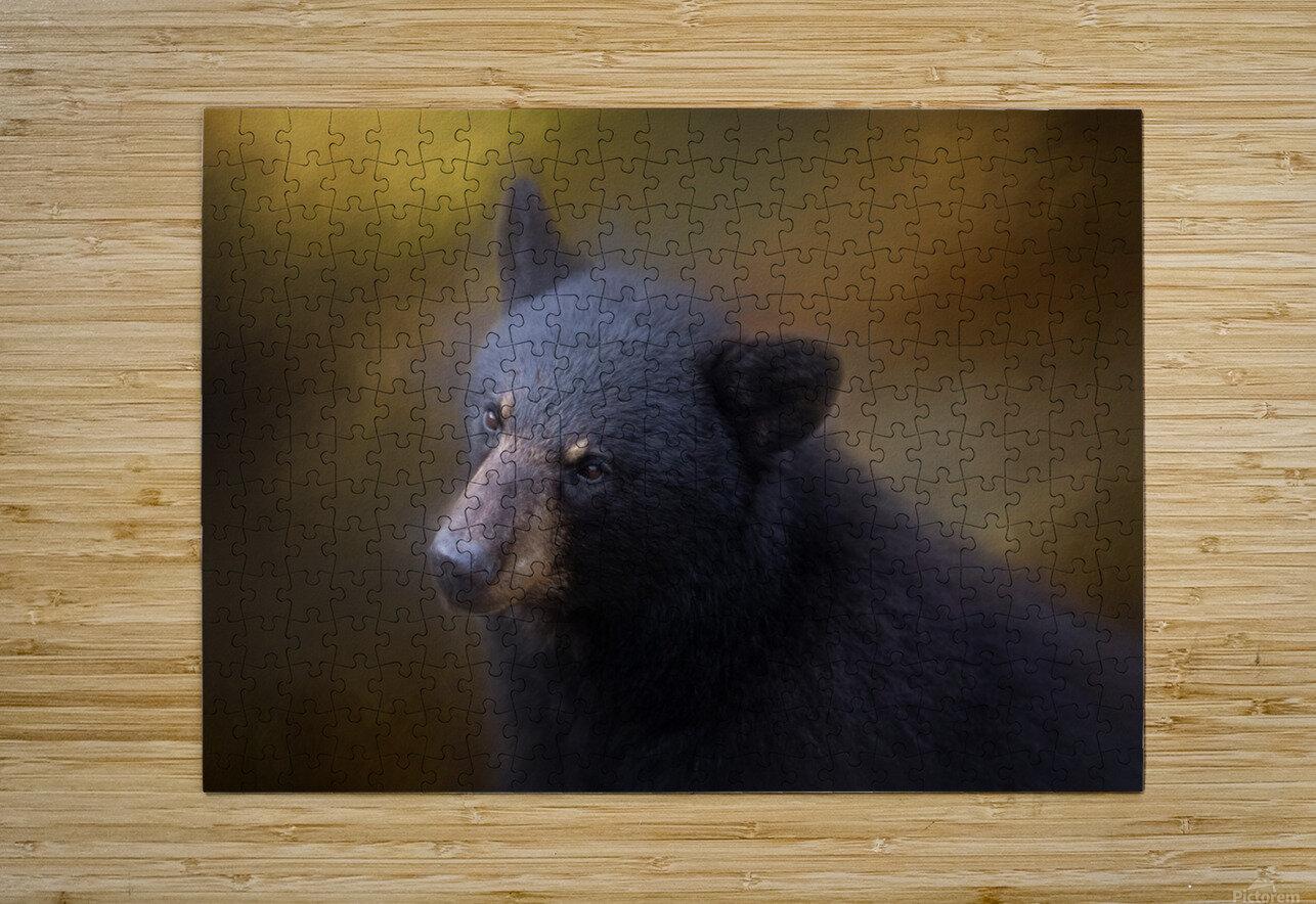 Black Bear Portrait  HD Metal print with Floating Frame on Back