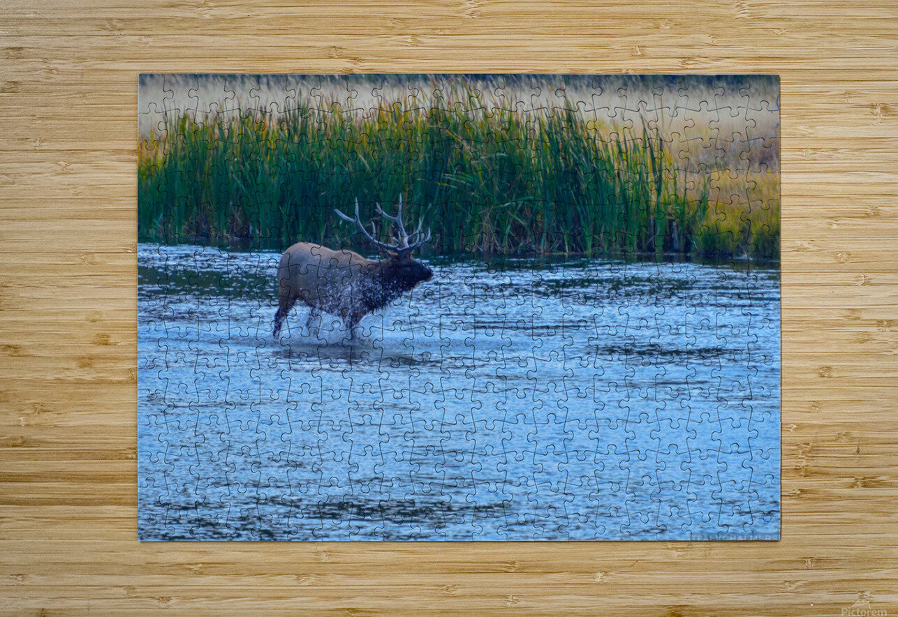 DSC_8408  HD Metal print with Floating Frame on Back