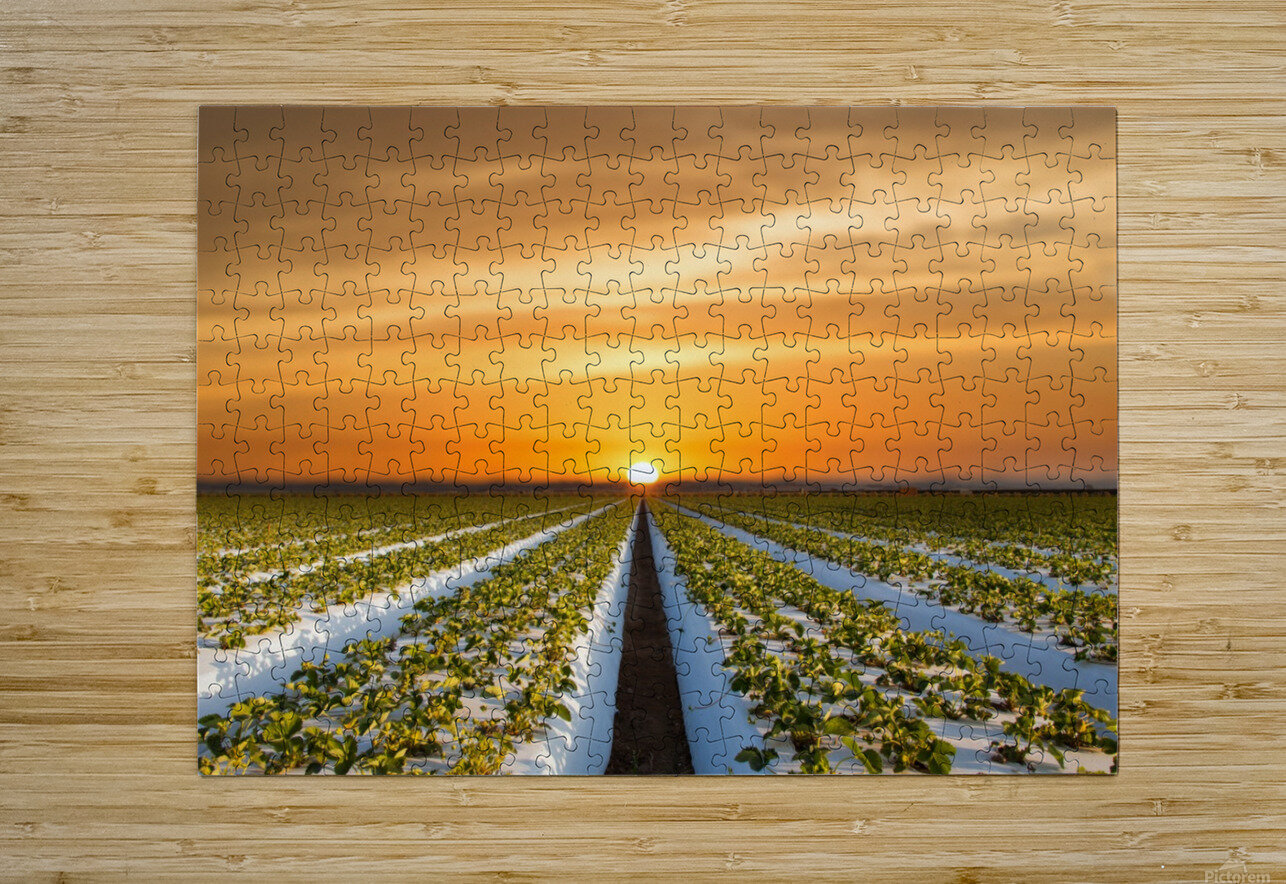 Strawberries in making  HD Metal print with Floating Frame on Back