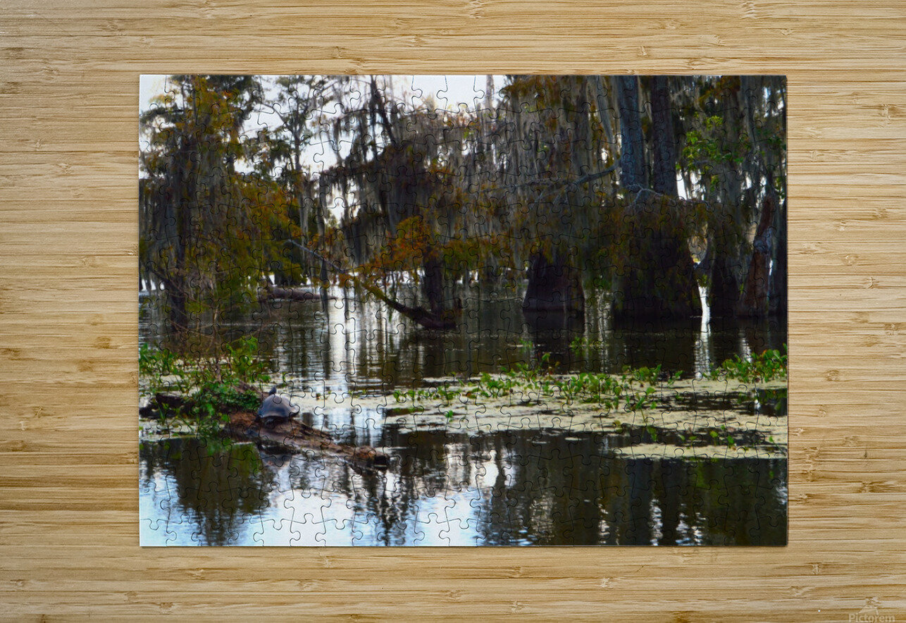 Turtle Territory    HD Metal print with Floating Frame on Back