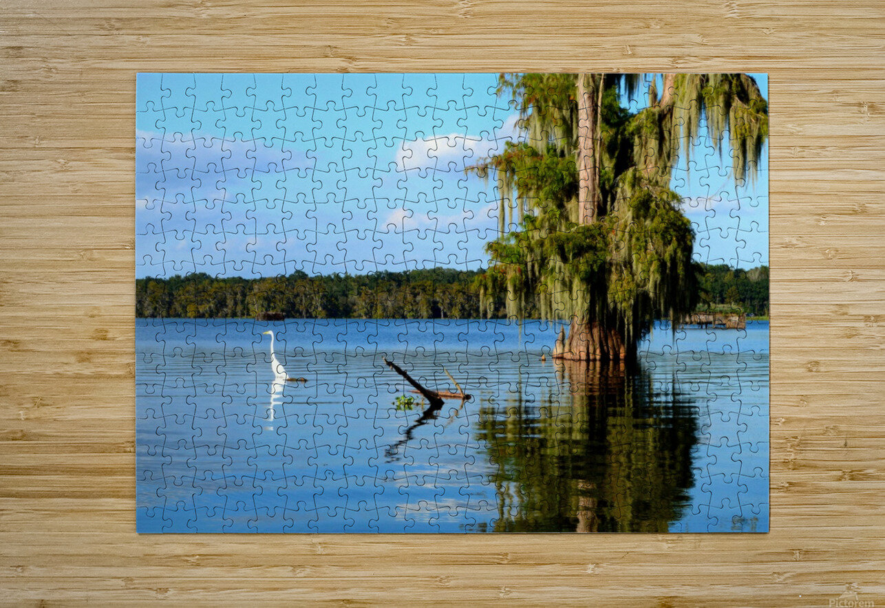 Swim or Not  HD Metal print with Floating Frame on Back