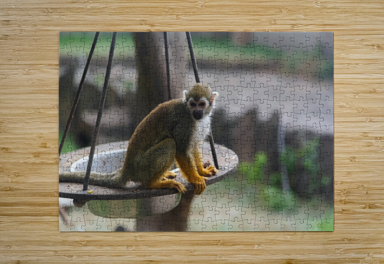 A Snack  HD Metal print with Floating Frame on Back