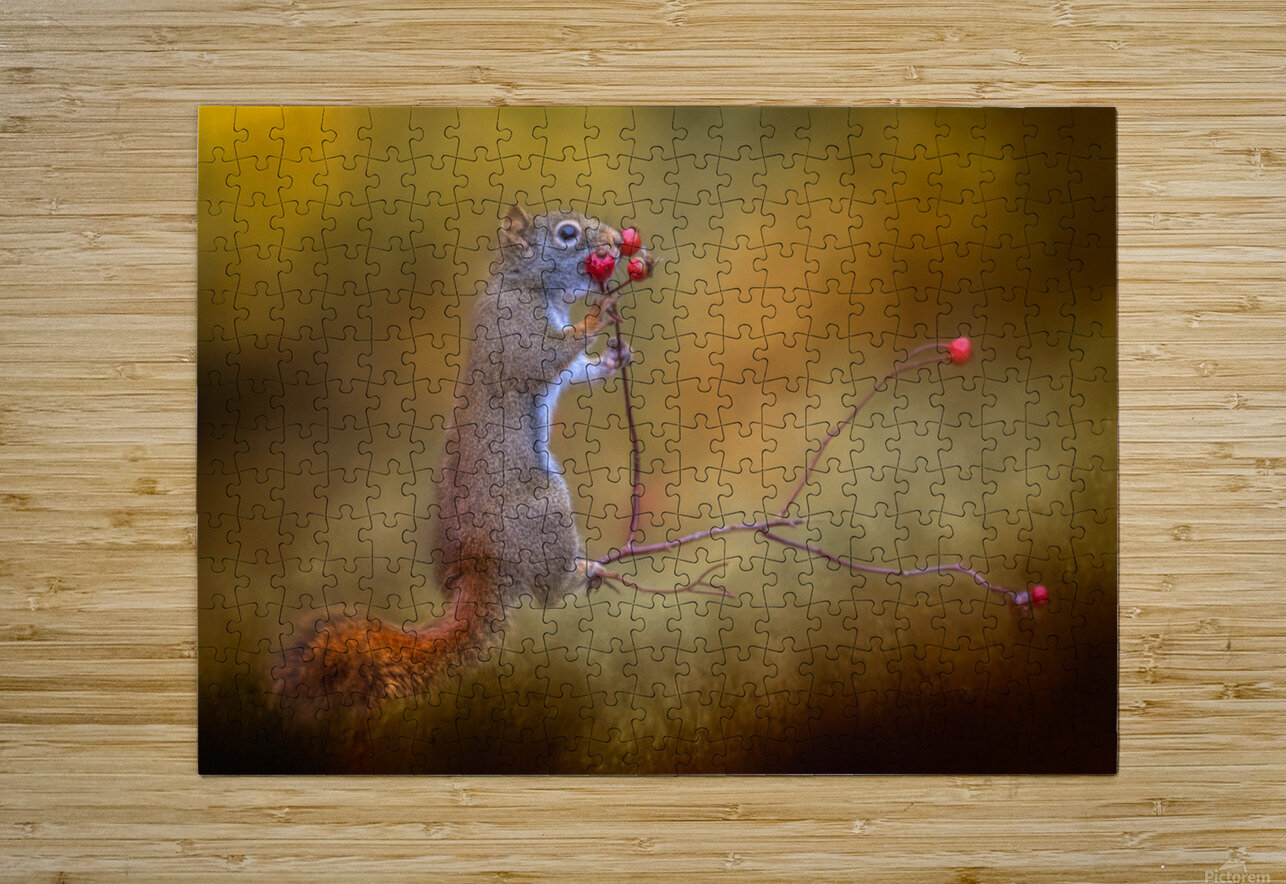 Snack Time  HD Metal print with Floating Frame on Back
