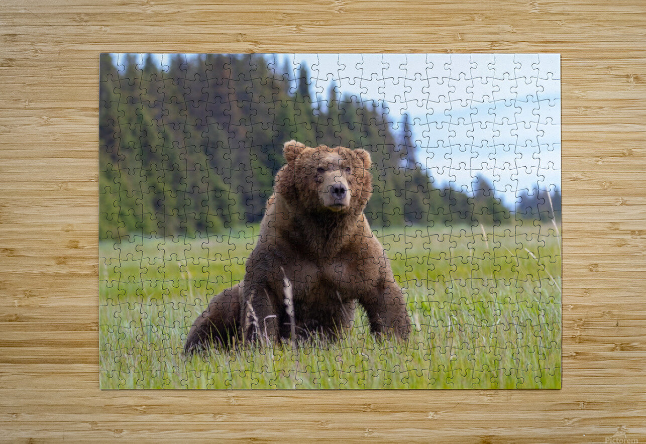 Big boy in the Meadow  HD Metal print with Floating Frame on Back